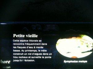 chantoune-300x225